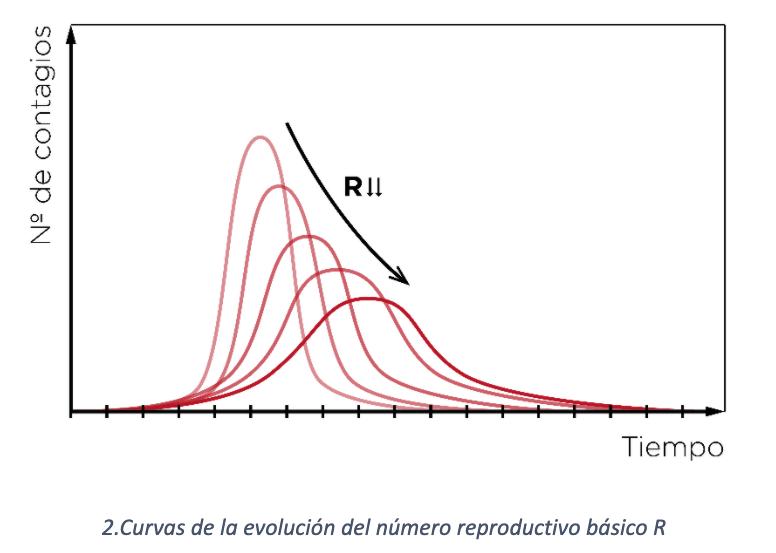 curvas número reproductivo básico R